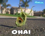 Oh Hey!