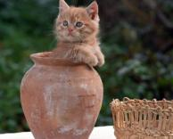 חתול בלש