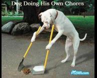 כלב עובד בניקיון