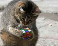 חתול חכם