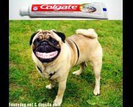משחת שיניים
