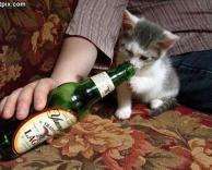 חתול שותה