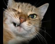 חתול שיצא באלכסון
