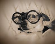 כלב חנון