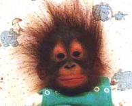 קוף מחושמל