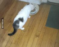 חתול על הפרווה