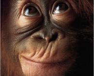 קוף חושב..