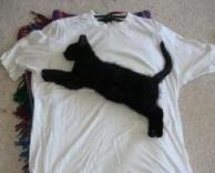 פומה?חתול שקפץ על חולצה?