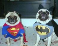 כלבים בתחפושת