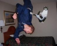 החתול הלוחם