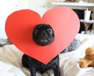כלב בתחפושת לב