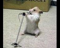 עכבר נולד