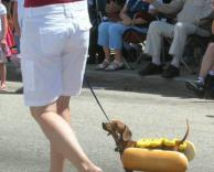 כלב בלחמניה