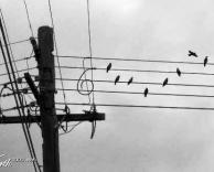 סולם מוסיקלי או עמוד חשמל