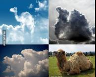 גמלים בשמיים