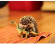 איך הדינוזאורים נכחדו