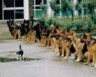 חתול אמיץ