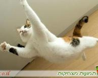חתול נינג'ה