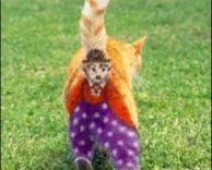 צביעה מיוחדת לחתולה