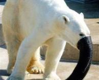 דוב בתחפושת של פיל