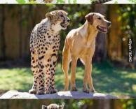 ידידות מופלאה