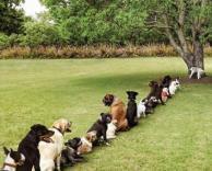 כלבים בהמתנה