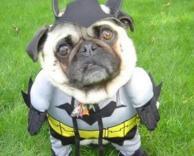כלב בט-מן