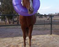 סוס ים