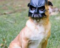 כלב באטמן