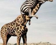 שק קמח אצל חיות