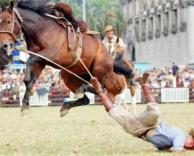 סוס משתגע