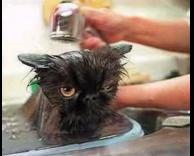 ככה שוטפים חתול