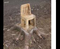 עץ מנוסר