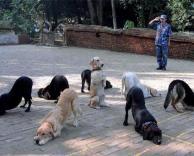 חיילים כלבים