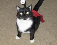 חתול המנהרות