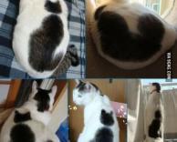 חתולה עם ציור של חתול על הפרווה!