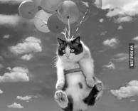 חתול פורח