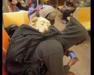 כלב עייף
