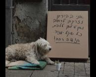 כלב הומלס
