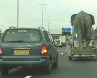 העברות פילים....
