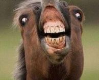 סוס מופרע