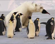 גם אני פינגווין