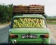 ככה מובילים תפוחים