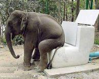 פיל מחרבן