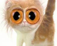 חתול המום