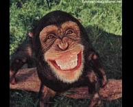 קוף שמח