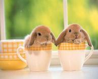 ארנבונים חמודים