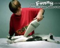 לנקות את החתול