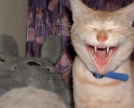 חתולערפד