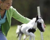 הסוס הכי קטן בעולם